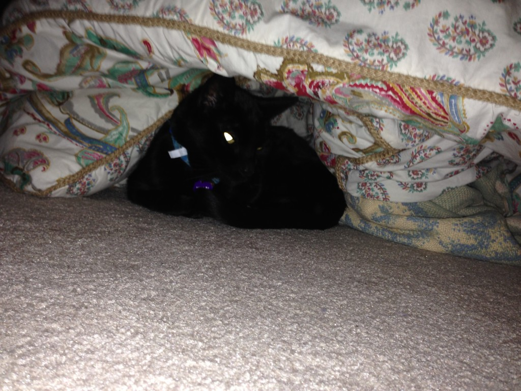 kitty in hiding