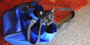 """I can't go shopping because my cat sits in my shopping bag."""