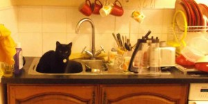 """I can't do the dishes because my cat sits in the kitchen sink."""