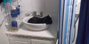 """I can't clean the bathroom because my cat lies in the wash basin."""