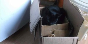 """I can't recycle the old cardboard boxes because my cat is still using them."""